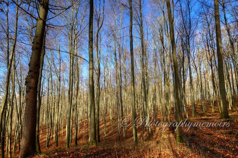 Germany landscape Photography.jpg